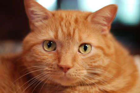 Photo of domestic cat Reklamní fotografie
