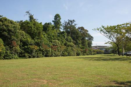 빈 잔디 토지와 푸른 하늘이 트리 스톡 콘텐츠