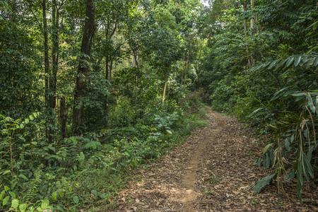 숲에 원시 진흙 도로 및 나무의 전체 양쪽
