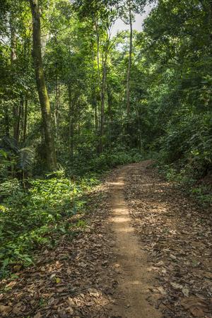 숲과 나무로 가득한 길
