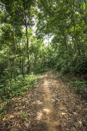 숲과 나무로 가득한 원시 도로