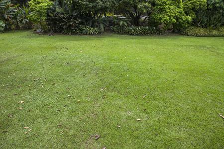 배경에서 나무를 많이 빈 잔디 필드
