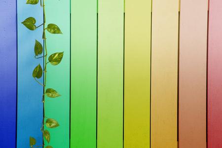 beautiful green leaf on colourful rainbow wood texture