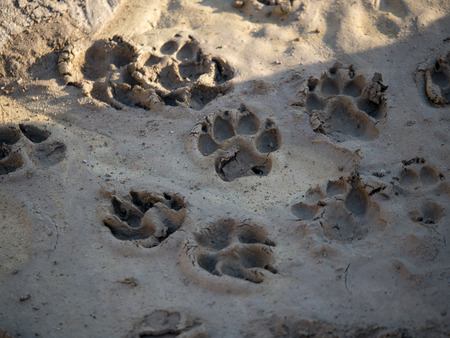 Dog pawprints in mud and shade