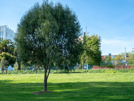 Small willow tree in urban park area