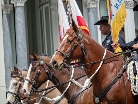 SAN FRANCISCO, CA – APRIL 22, 2018: San Francisco Police Department horses from mounted patrol marching Editorial