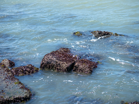 Barnacles hanging off of concrete debris in shallow water in the Stock Photo