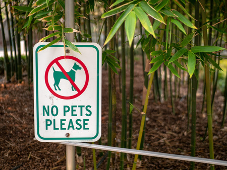 A no pets please sign with dog crossed out hanging in a garden area Banque d'images - 105228708