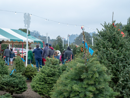 Long line of shoppers in line at Christmas tree market during holiday