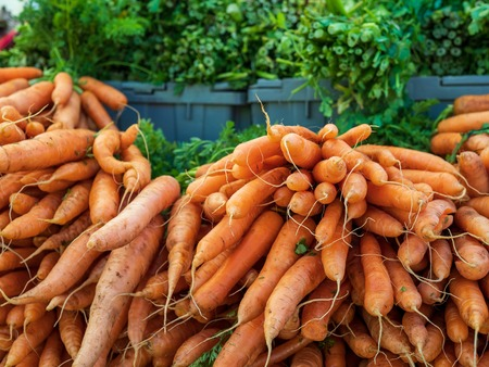 Mounds of raw, organic carrots unprocessed and on display at farmers market