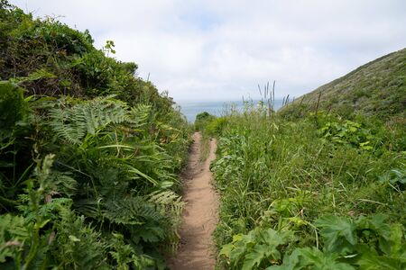 Narrow hiking trail path surrounded by bushes and weeds leading to ocean view Stock fotó