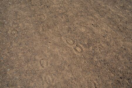 Horseshoe prints dug into dried dirt road in daytime
