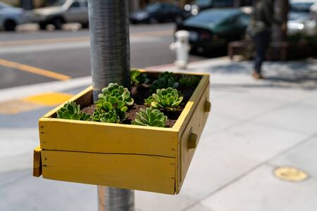 Yellow basket drawer filled with succulent plants hanging on street post Imagens