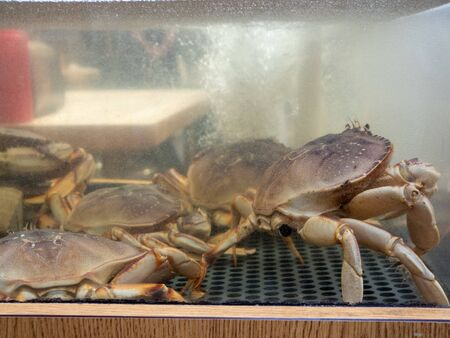 Large pile of dungeness crab sitting in tank in seafood market