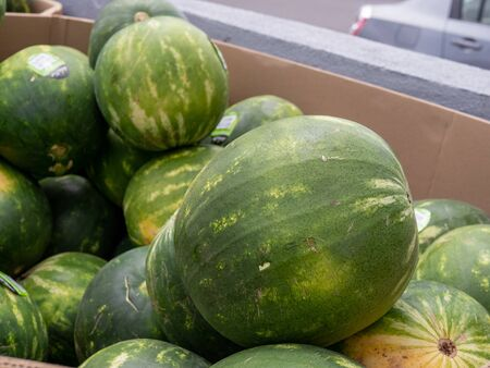 Watermelon piled in cardboard box in an outdoor grocery market