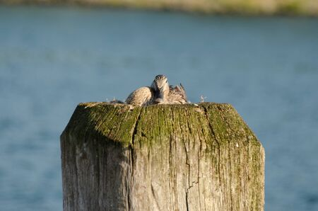 A duck resting on top of a wooden pillar