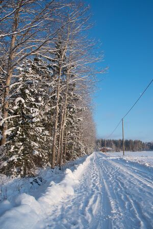 pinetree: Snowy road along a pinetree forest Stock Photo