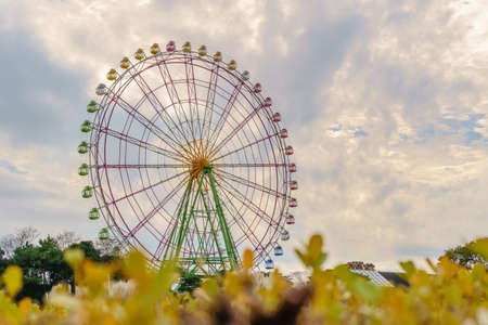 Suzuki(Japanese Pampas Grass,Miscanthus sinensis) with ferris wheel behind in Hitachi Seaside Park, Famous beautiful garden and playground for tourist in North of Japan
