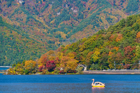 Pink duck paddle boat floating in the middle of Kawaguchiko Lake. Autumn in Lake Kawaguchiko is the best places in Japan to enjoy of maple leaves changing color giving image of those leaves
