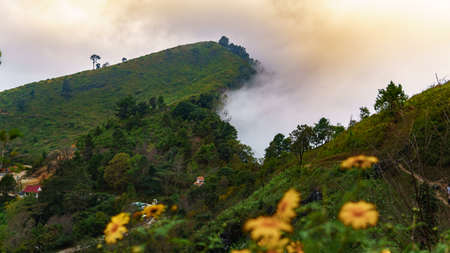 The mist moves through the Mountains, A beautiful view point of Doi Pha Tang, Chiang Rai, Thailand
