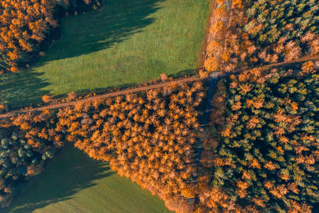 Overhead drone shot of yelow pine trees by highway and green field in Luneberg Heide forests in autumn