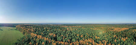 Aerial panoramic drone shot of Luneberg Heide forests pine trees in autumn time