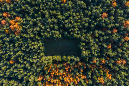 Overhead drone shot of yelow pine trees by highway with clearing field in Luneberg Heide forests in autumn