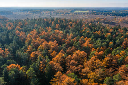 Aerial drone shot of yellow green pine tree forests in Luneberg Heide woodand in Germany in autumn Banco de Imagens