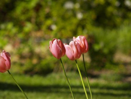 garish: flowers