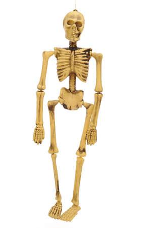 Toy Skeleton