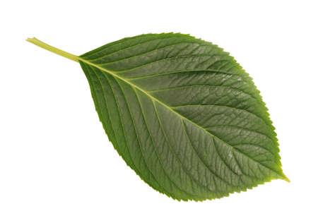 plant leaf,