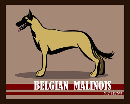 Vector illustration of Belgian Shepherd Malinois dog. It is standing.
