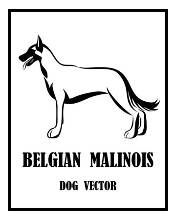 Black and white vector of Belgian Shepherd Malinois dog. It is standing.
