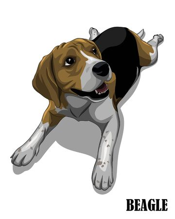 Vector illustration of the beagle dog is looking above. Like it is hungry and waiting for food. Ilustração
