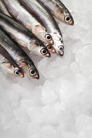 Fresh Anchovies on ice