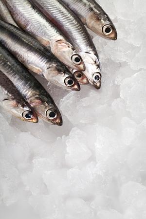 Fresh Anchovies on ice