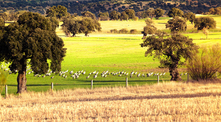 Cranes at field. Stock Photo