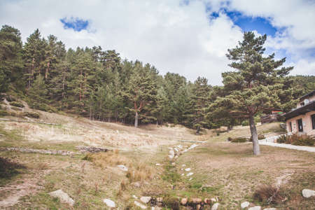 pinetree: Pinetree forest in madrid Mountain range.