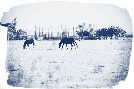 Summer Australian landscape with horses. Vintage effect. Stock Photo