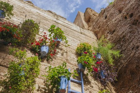 Street wall full of plants and flowers at Cordoba courts fest.