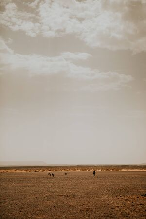 Sahara desert view, and berber shepherd with animals in the background. 스톡 콘텐츠
