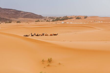 Caravan of camels, sitting and waiting to make a desert tour for tourists in Merzouga, Morocco.
