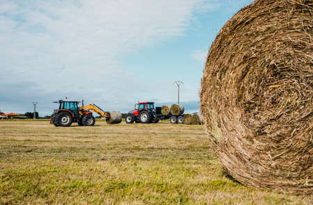Red tractors carrying straw bales during harvesting, and one bale in front. Banque d'images