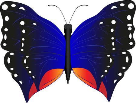 psyche: Mariposa hermosa insecto que agrada a la vista Vectores