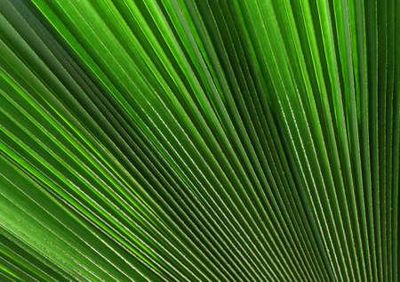 palm tree leaf Stock Photo - 521503