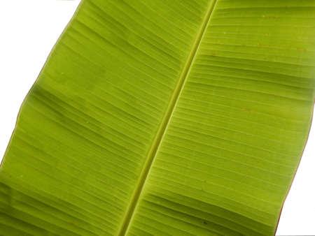 big banana leaf Imagens - 658664