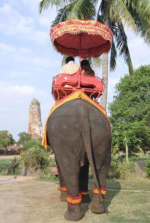 elephants in thailand