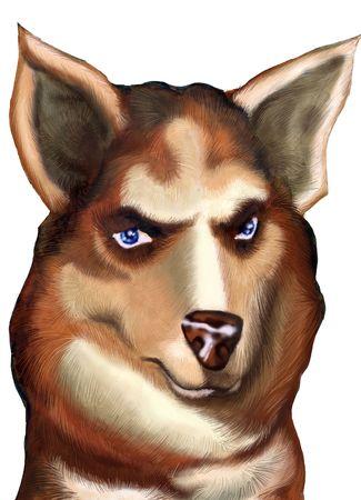drool: Siberian Husky face Stock Photo
