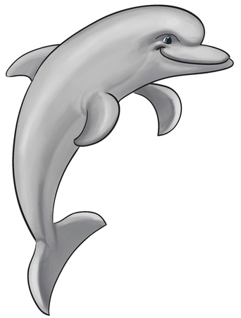 gray and happy dolphin jumping and smiling  photo