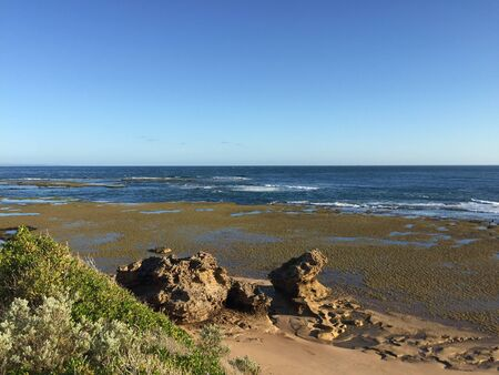 Coastline of Point Lonsdale, Australia during low tide showing blue ocean, green and yellow algae, as well as rocks and bushes in the front Standard-Bild